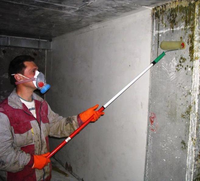 Чем удалить плесень со стены в квартире