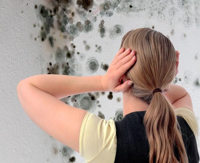 Как избавиться от плесени в квартире или доме