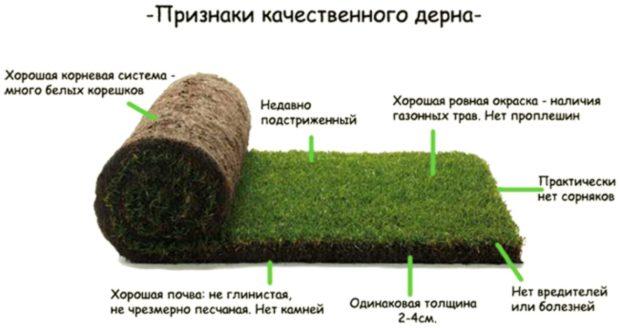 11 советов, как укладывать рулонный газон своими руками