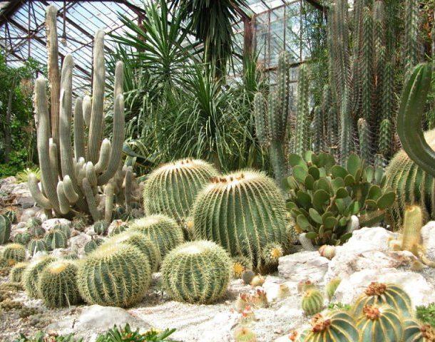 Подбор растений для зимнего сада