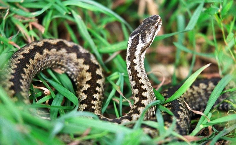 8 советов, как прогнать змей с участка