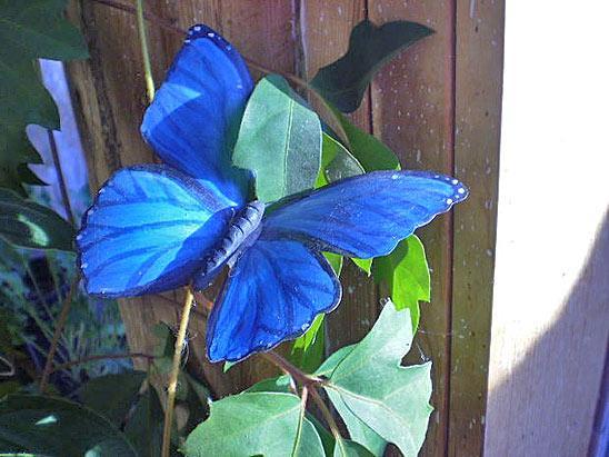 бабочки из пластиковых бутылок 4