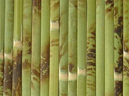 бамбуковые обои цвет 2