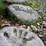 11 советов по выбору форм и заливке садовых дорожек