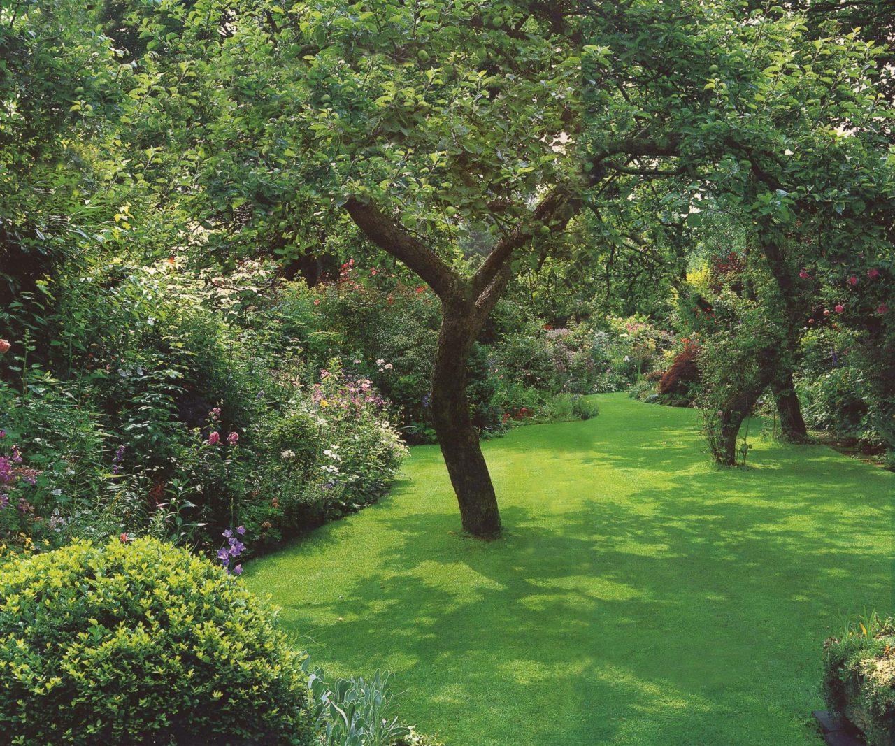 деревья на маленьком участке