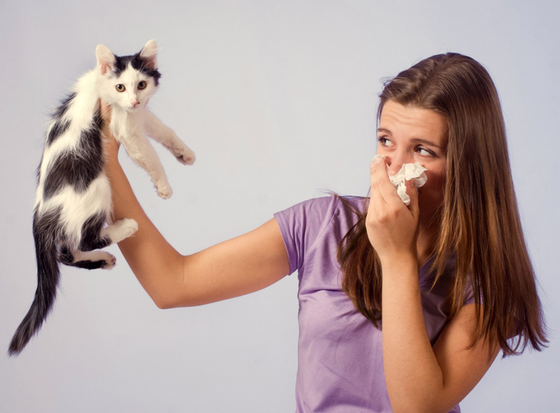9 способов, избавиться от запаха кошачьей мочи в квартире