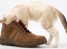 запах от обуви