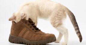 17 советов, как избавиться от запаха обуви