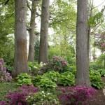 лесной  стиль в ландшафтном дизайне 4