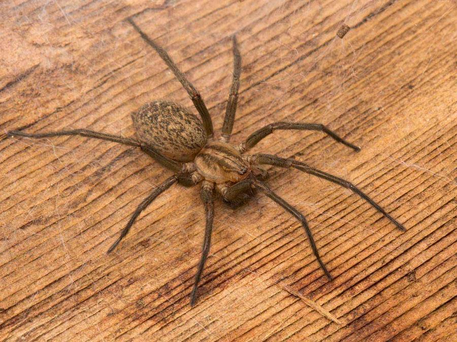 15 способов, как избавиться от пауков в доме