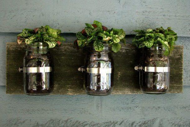 Комнатные растения в банках закреплённых на стене