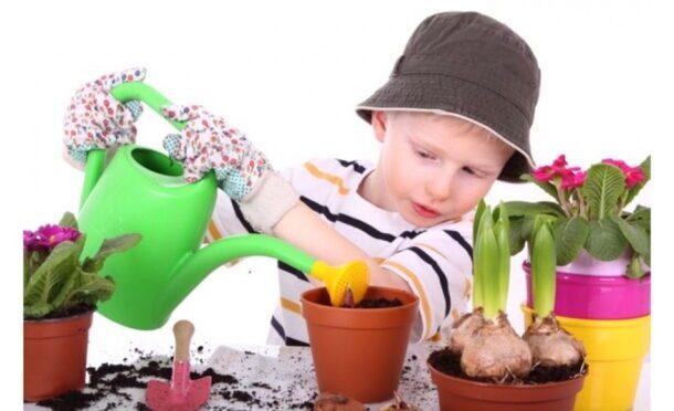Ребенок ухаживает за комнатными растениями