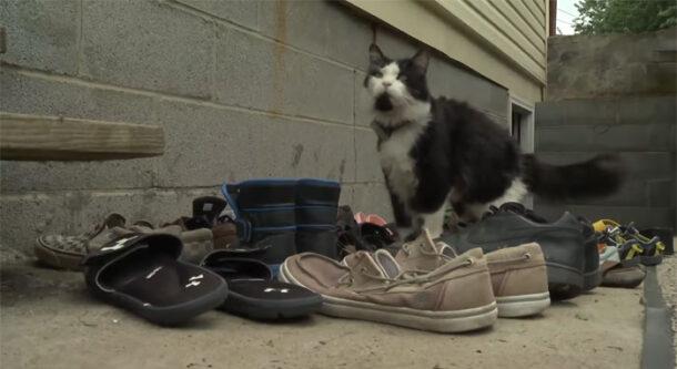 Проделки домашних животных