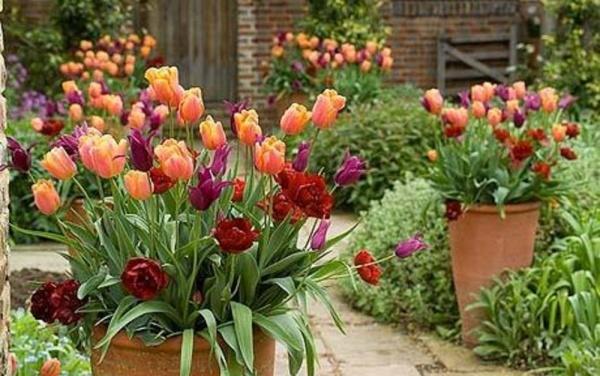 цветы на маленьком участке