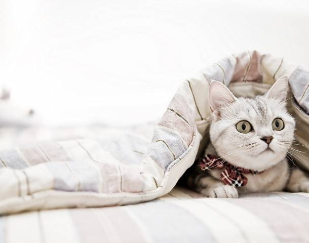 Чехол одеяла